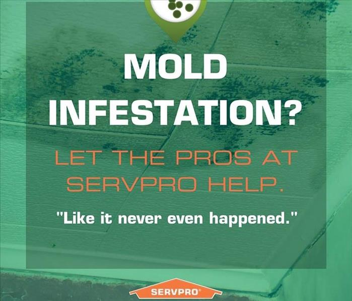 Mold Remediation Defending Against Mold Growth